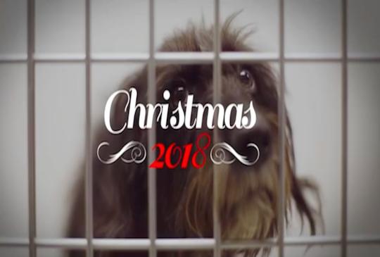 最悲傷的聖誕影片!寵物是生命,請不要因為一時想討人歡心而讓牠傷心。