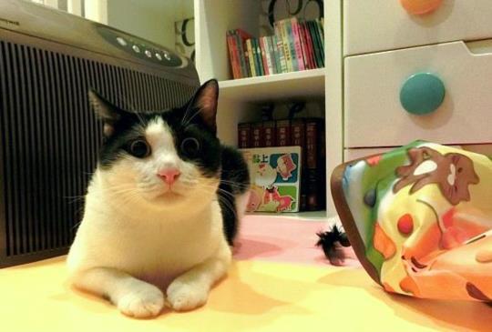 【瘋狂追逐戰】貓奴終於可以翹腳看電視之自動逗貓器