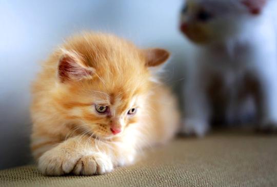 「有人在哭嗎?」你心中的傷,就讓夜巡貓來撫慰吧