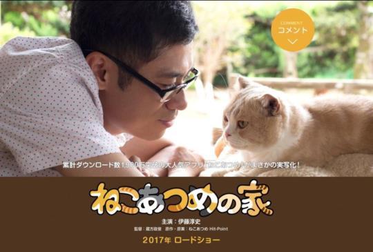 【《貓咪收集之家》:療癒的存在】