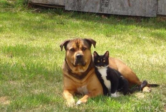 十大寵物友善國家(上):哪個國家法律規定「認養寵物必須通過兩個考試」?