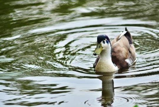 台北攝影趣(二十二)植物園的鳥