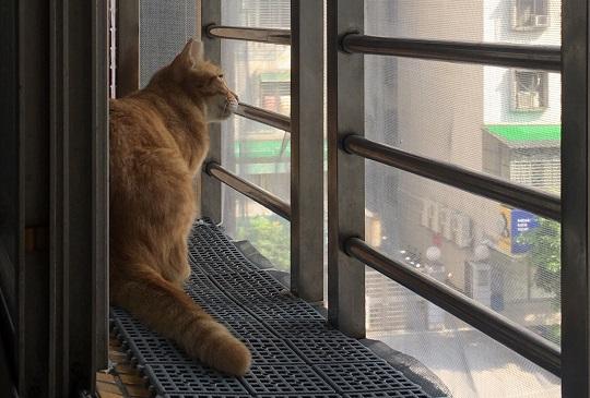 【平價安全】輕鬆打造人人都可擁有的喵喵觀景台