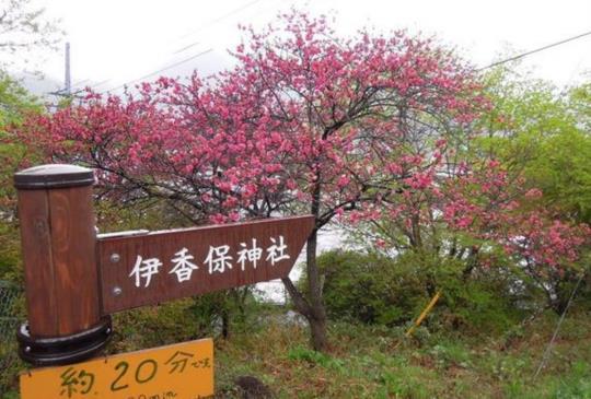 【日本】伊香保:悠遊夏綠楓紅的群馬縣名湯勝地