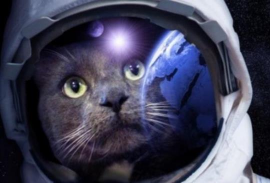 【維基解咪】研究顯示 貓咪的呼嚕聲可以送太空人到外太空?!