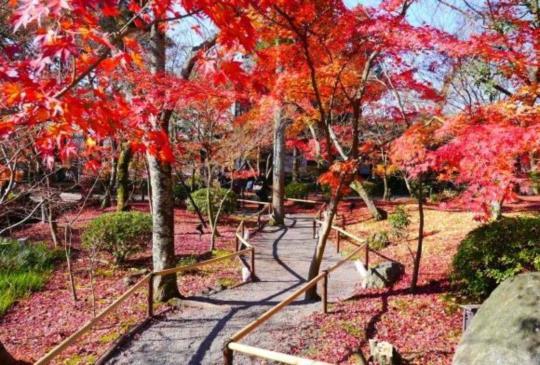 【京都】秋楓之美-必訪紅葉名所