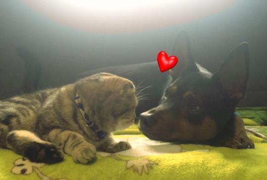 【療癒系影片】貓狗的日常──童童X經理