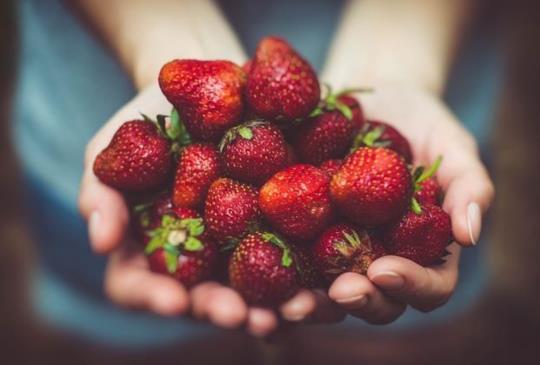 【是時候再安排一趟採草莓之旅了!和多汁新鮮草莓來個充滿粉紅香氣的約會吧!】