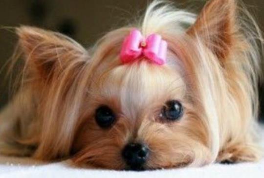 【預防糾紛】寵物美容前,飼主與美容師該知道的事!