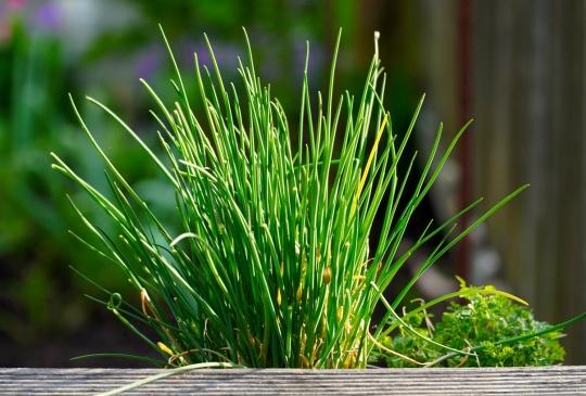 韭菜的成長型態 - 犯了任何一點都可能被割韭菜