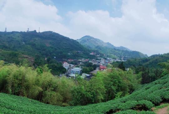 【茶香竹林飛龍橋】嘉義山城太平村風情遊