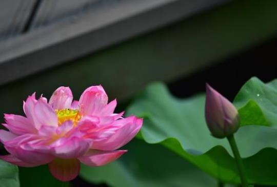 夏天到了,拍花去吧~~~~