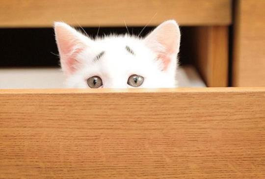 8週大小白貓,天生『擔心眉』,一輩子有戲