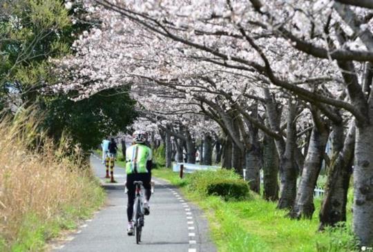 【在日本騎腳踏車前一定要知道的七件事】
