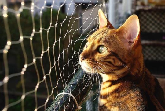 藥師和獸醫師到底在吵什麼?幫動物開個藥為什麼這麼多問題?