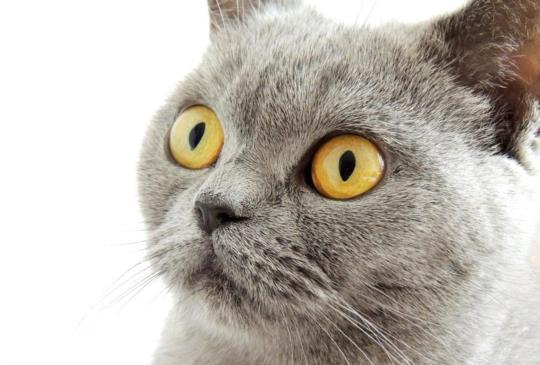 2017年各縣市犬貓絕育補助一覽表