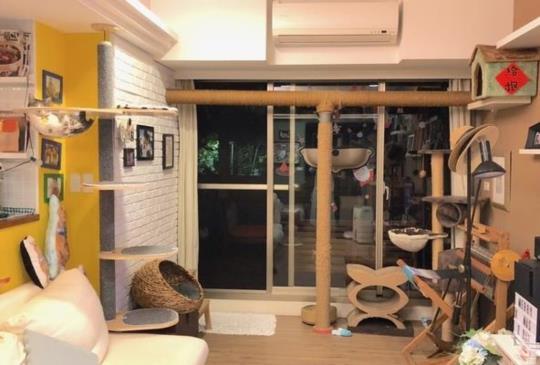 【打造貓咪天堂】貓咪不打架妙招「垂直空間」速成術