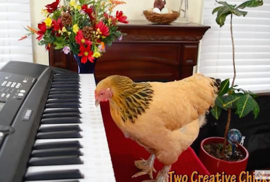 【有趣影片】音樂才子換雞當,超強鋼琴技術!新一代貝多芬