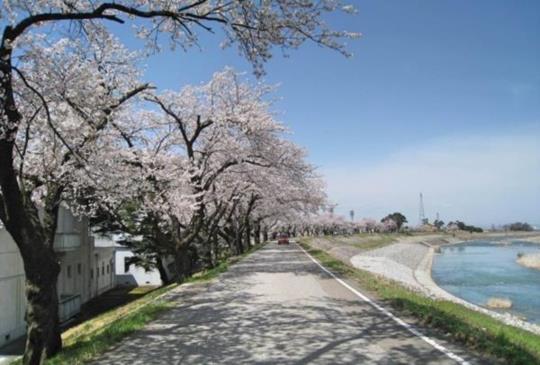 【『富山縣南砺市』日本列島最後一個秘境:庄川峽乘船賞櫻】