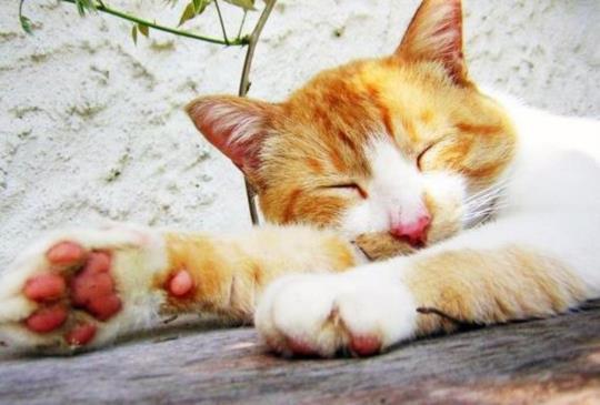 【睡太多容易胖!過度睡眠的7個危害,看完這些你就不敢賴床了】