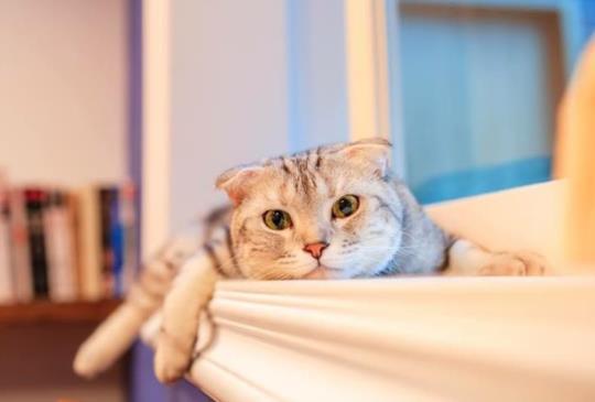 【療癒系—毛小孩的親密接觸】能近距離與貓狗互動的餐廳精選!