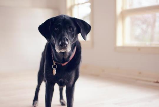 中獸醫師寫給體質有風-寒-溼症狀的寵物食療燉飯