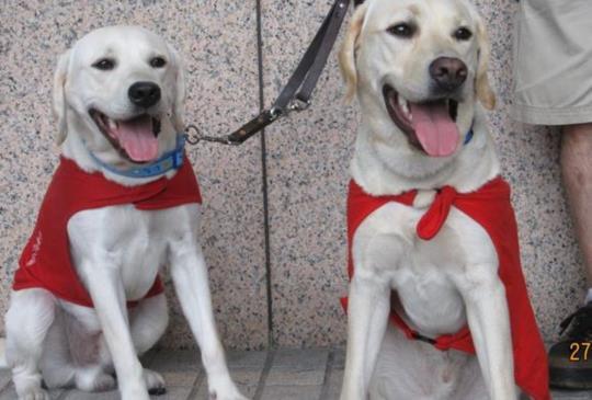 工作犬奉獻一生 人類能為他們做什麼?