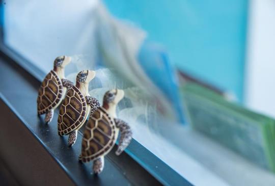 【熱愛海洋守護海龜的人】