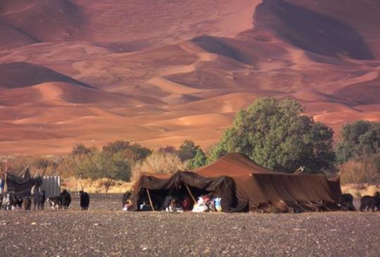 【守護撒哈拉沙漠的美麗】