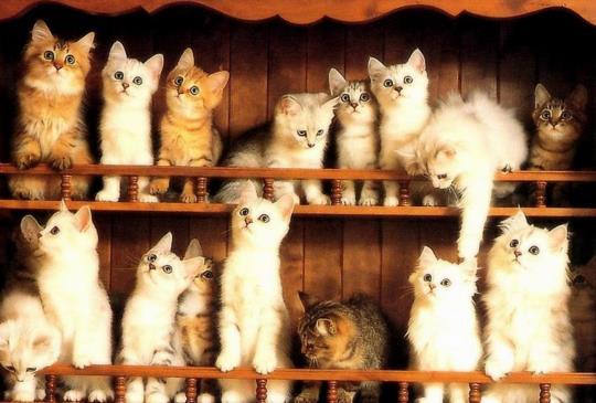 從毛色可以看出貓咪的個性!?