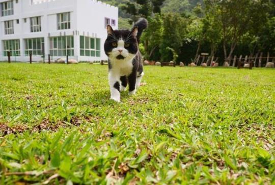 『苗栗南庄寵物新天地』麥克尼城堡裡的追趕跑跳碰!