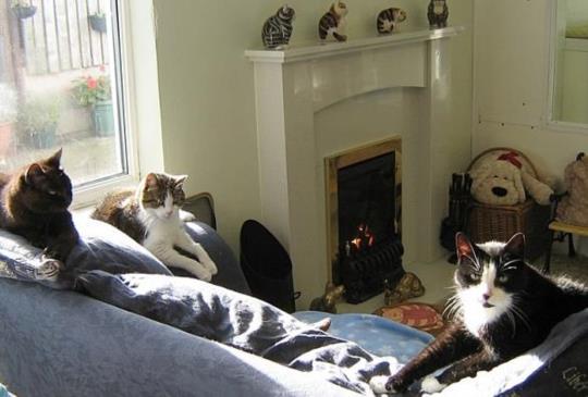 【林肯郡貓咪信託】貓咪也能安享晚年