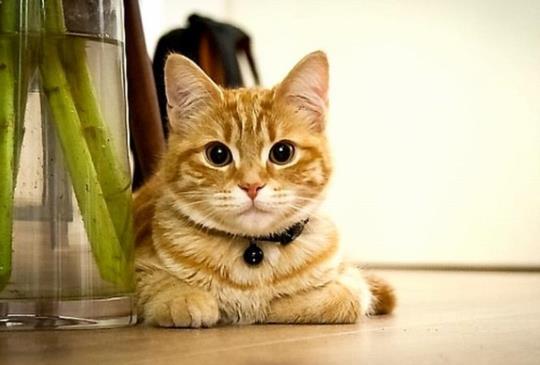 【我適合養貓嗎】養貓前的自我檢視兼快速上手懶人包