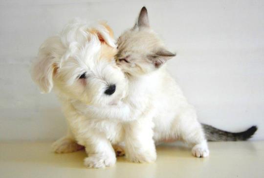 學會各具功效的按摩手法,讓動物朋友更愛你(1)