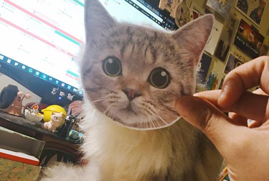 貓咪保母樂Talk系列│虎斑控大集合!
