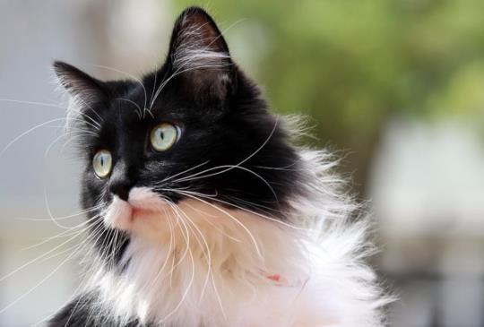 【貓咪好忙】牠們用全身表達自己的情緒,不要再說喵星人很難懂啦