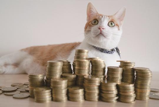 【我的貓系生活】養貓前的自我評估