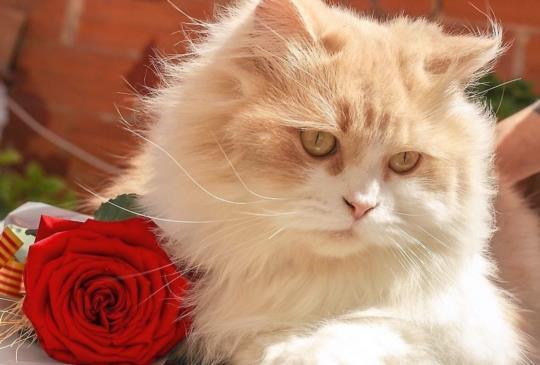 【這些東西不能吃!】貓咪狗狗有毒植物一覽表