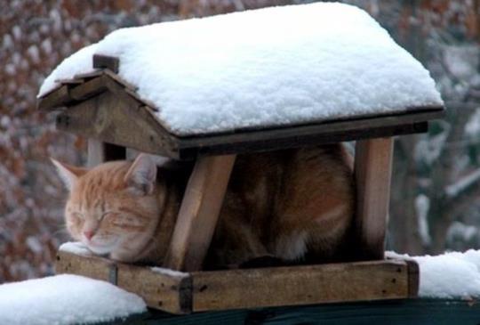 【讓浪浪過寒冬】簡單紙箱貓屋,讓街貓遮風避雨