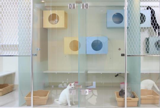 台北平價貓咪旅館大搜查
