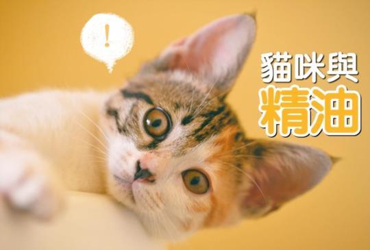 【精油專家告訴你】貓咪、狗狗也可以使用精油嗎?(分頁閱讀)
