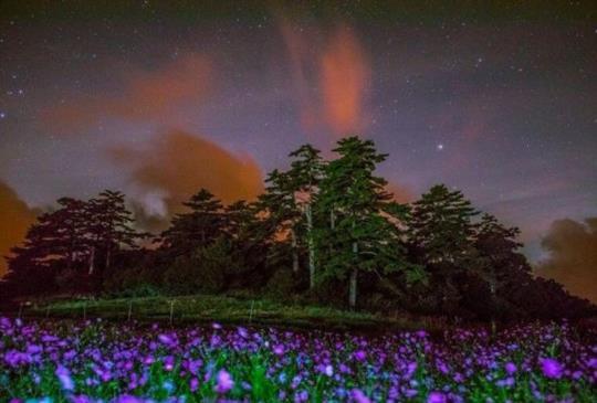【十月旅遊推薦】來一趟「台灣小瑞士」福壽山農場,波斯菊花海、深秋的楓紅與清脆蜜蘋果ㄧ次滿足