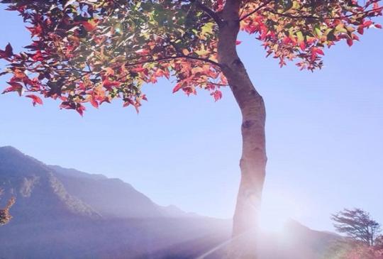 秋天專屬的顏色!讓楓葉翩翩、落羽松祕境一起染紅你的季節
