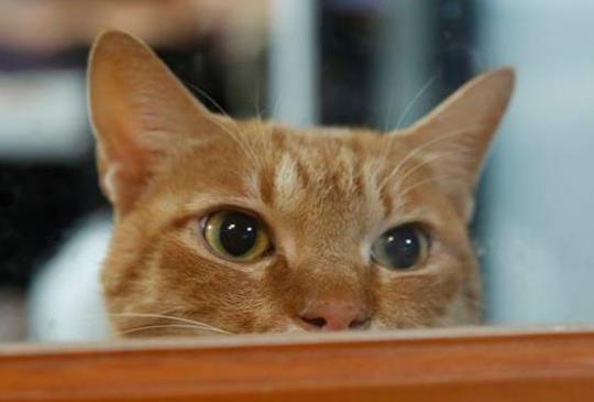經歷過這件事後,貓咪闖任何禍都覺得沒什麼了...