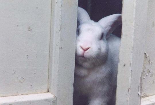 【人寵觀點】從《不存在的房間》看棄兔問題