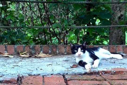 【餵食街貓的兩難】到底該餵還是放任不管?帶回家養或報清潔隊可以解決問題嗎?