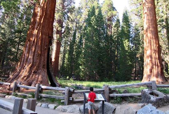 【美國】水杉國家公園:置身高聳入雲的巨杉群,讓你瞬間變成小精靈