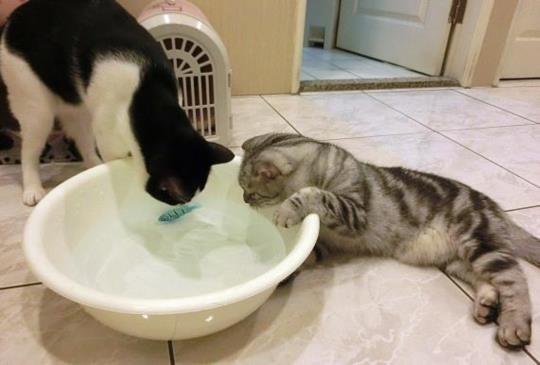 【玩具新選擇】讓貓咪愛不釋手的機械金魚