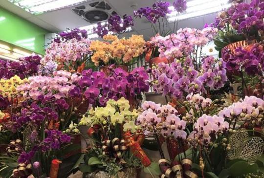 春節報到【台北花市】買花要趁早111小時不打烊
