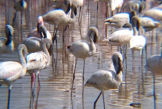 【肯亞】世界上最珍貴的火烈鳥觀賞地